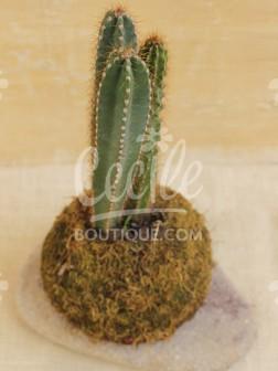 Kokedama Cactus Cereus